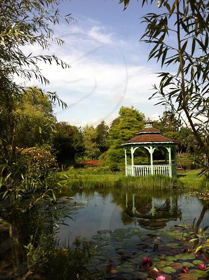 Waterlillies in an English country garden photo