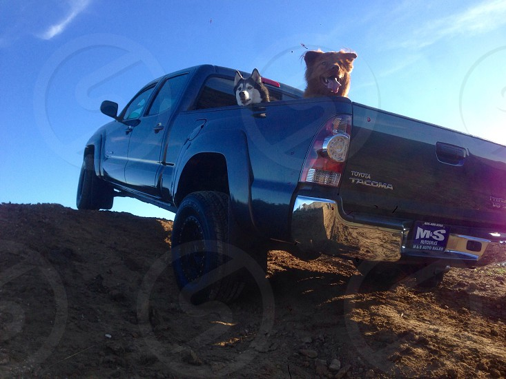 Truck adventure dog dogs outdoors fun nature off road photo