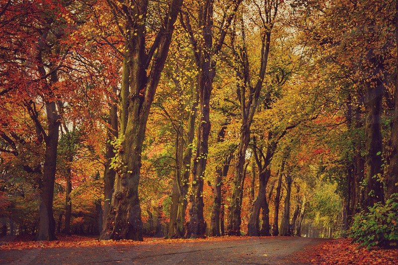 autumn park trees path road scotland dundee red green photo
