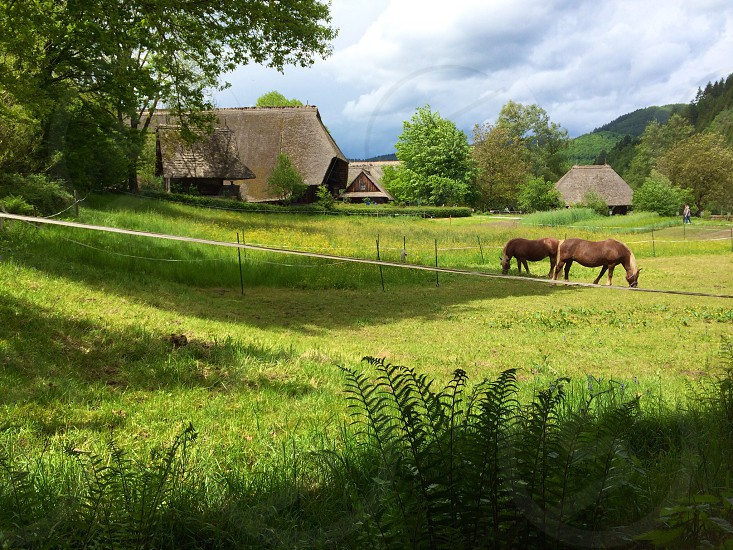 two brown horses eating grass near brown houses during daytime photo