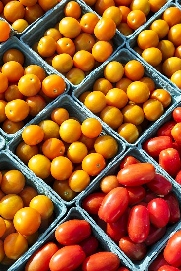 Farm to Table - tomatoes photo