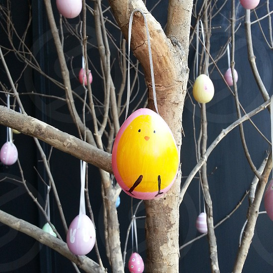 egg hunt tree cute chick hang pastel lovely happy photo