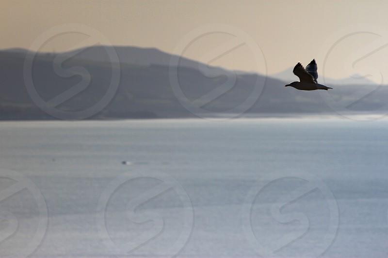 Seagull dusk photo