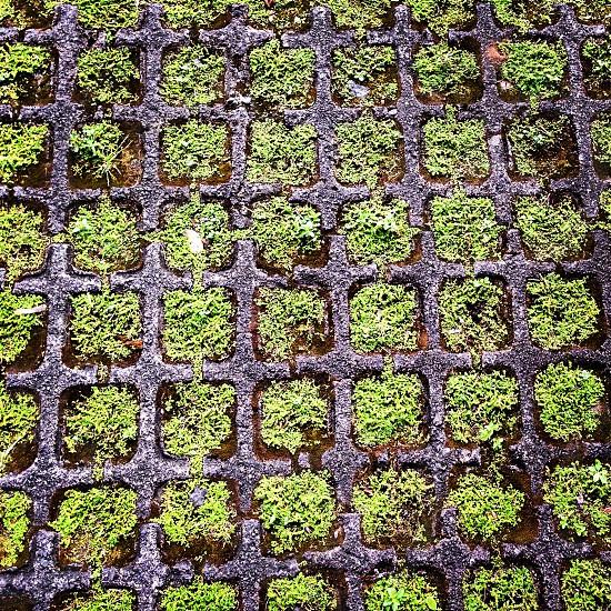 green leaf plantation photo