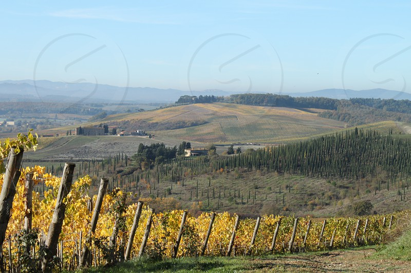 Chianti hills photo