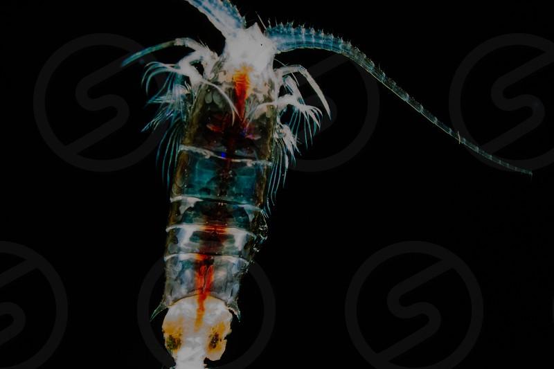 invertebrate in salt water aquarium photo