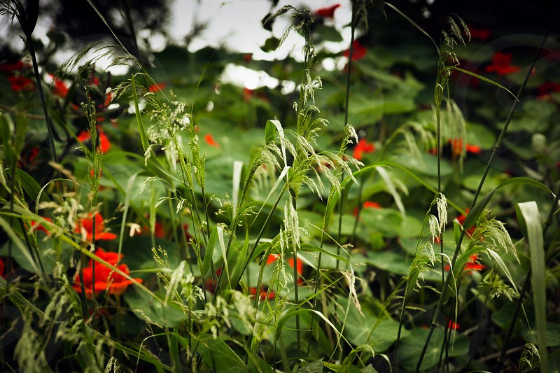 red flower and green plant field photo