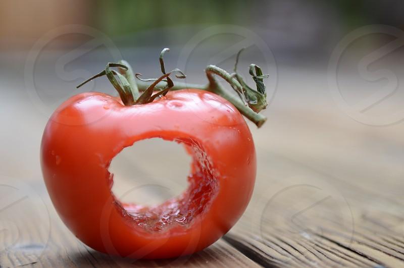 Global Poverty Project Logo Tomato  photo