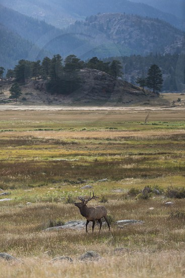 Wildlife in the Rocky Mountain National Park near Estes Park photo