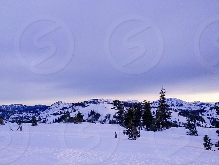 Truckee California snow pine trees mountains photo