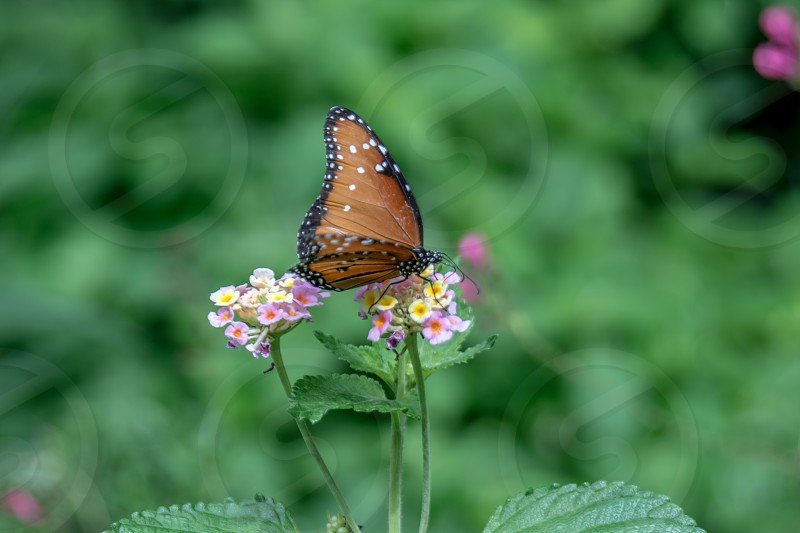 Wonderful flower and butterfly in garden positive happy emotion cute white purple orange black yellow green Monarch bokeh photo