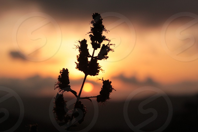 silhouette of plant during dusk photo