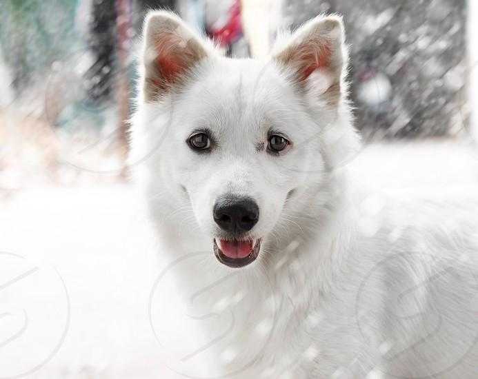 A cute dog in winter photo