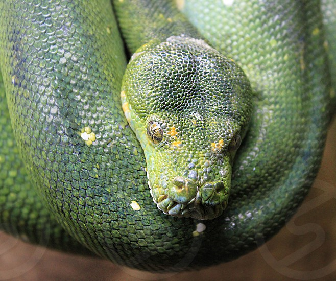 green and yellow snake photo