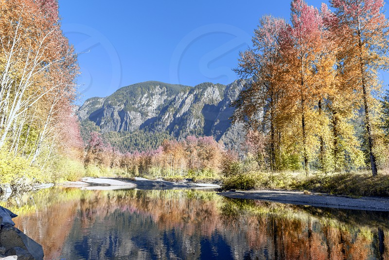 Autumn color changing aspen trees with reflection in calm river. photo