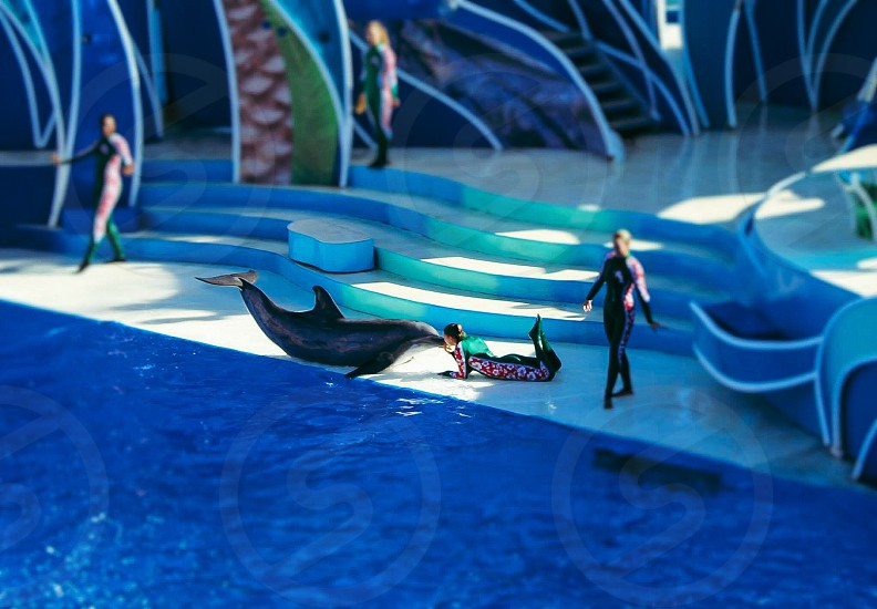 Lady and dolphin love.. photo