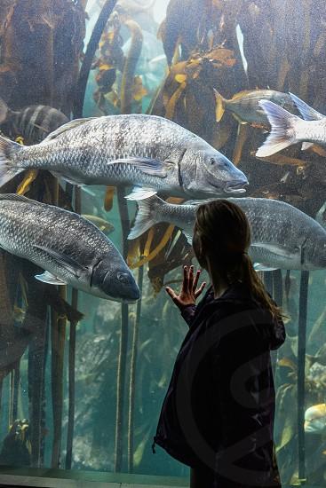 Two Oceans Aquarium - Cape Town photo