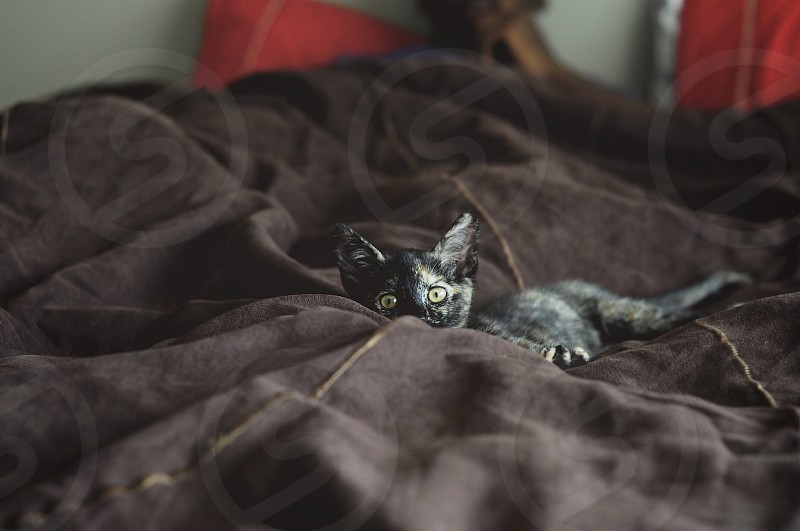 black small cat on black fabric surface photo
