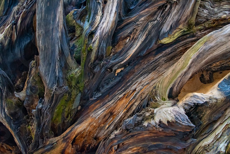 Roots tree shadows painting brush stroke photo