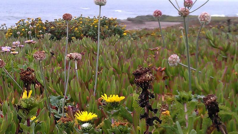 wildflowers Ca USA photo