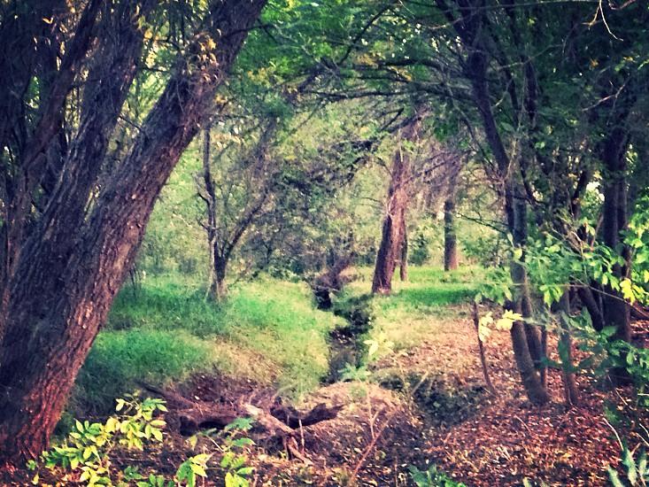 My backyard. photo