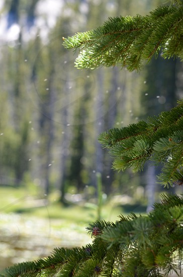 Pollen floating in the mountain air trees lake mountain nature photo