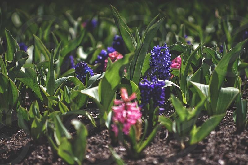 Spring has come  photo