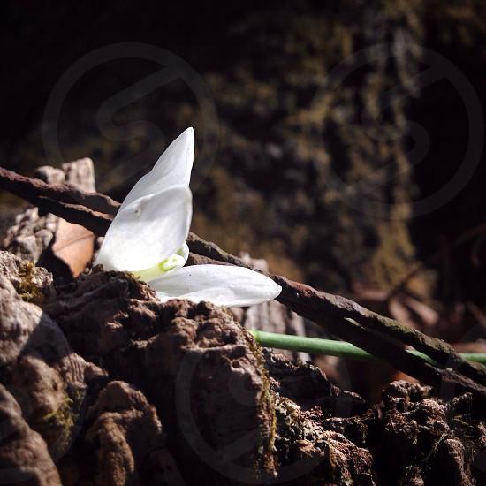 white flower on ground photo