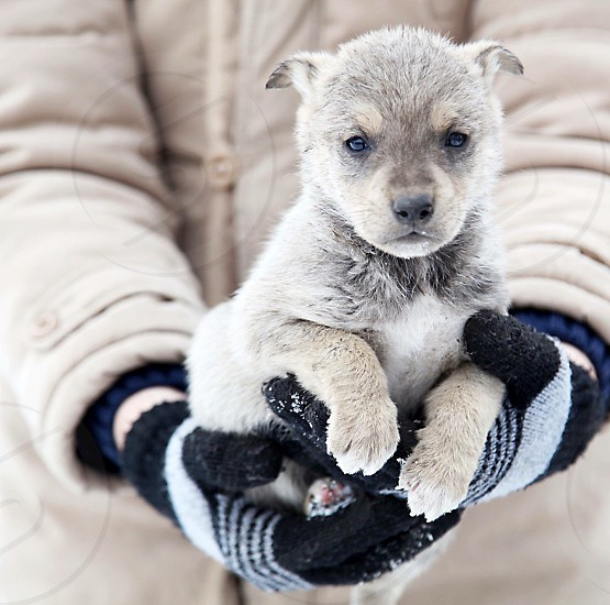 Homeless lonely loneliness puppy dog pet animal two in hands winter outside small little fluffy photo