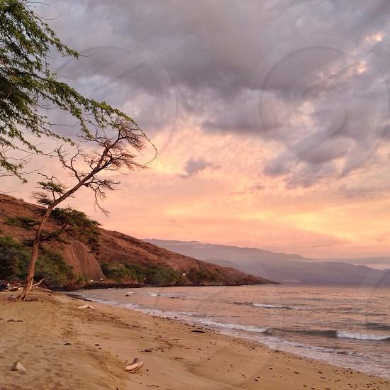 Pastel Paradise photo