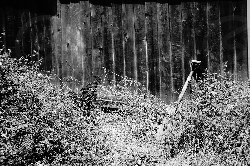 black handled shovel on bush plant photo
