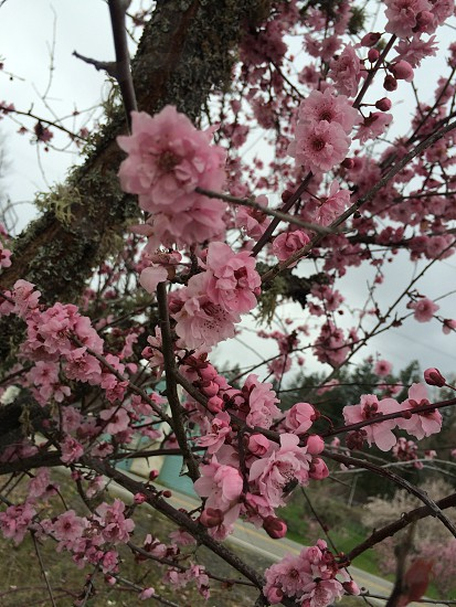 Spring has sprung¿? photo