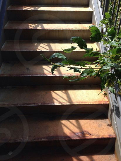 Rusty outdoor stairs with shadows and plants. photo