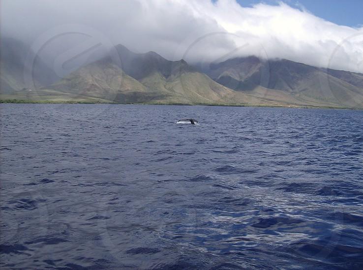 Maui whale tail photo