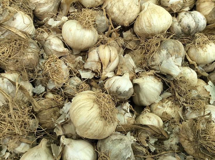 white garlic cloves photo