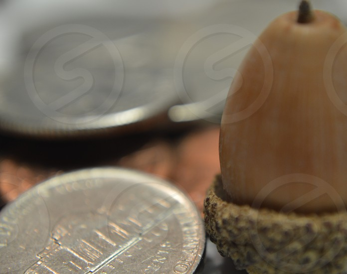 round silver coin by acorn photo