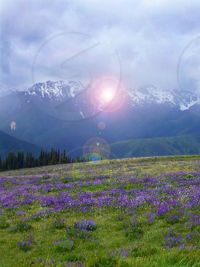 mountain meadow photo