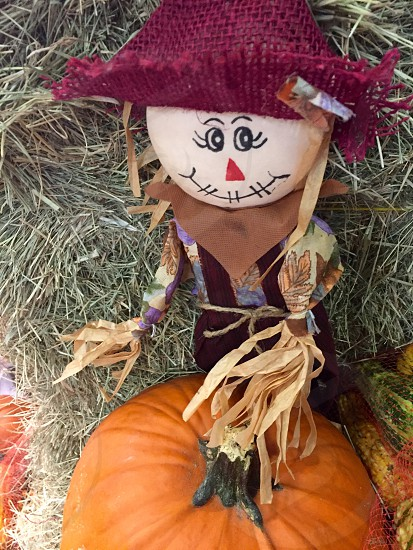female scarecrow knit doll on pumpkin photo