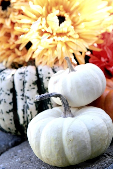 Happy pretty pumpkins and flowers photo