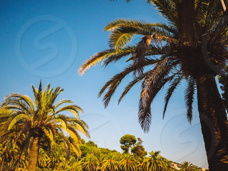 Amazing sunset on palm coast in the subtropics. Beautiful date palms trees in Barcelona. Awesome sky vintage retro tonned photo