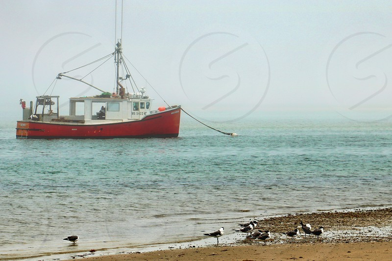 Fishing boat or trawler is anchored near a sandy beach with seagulls photo