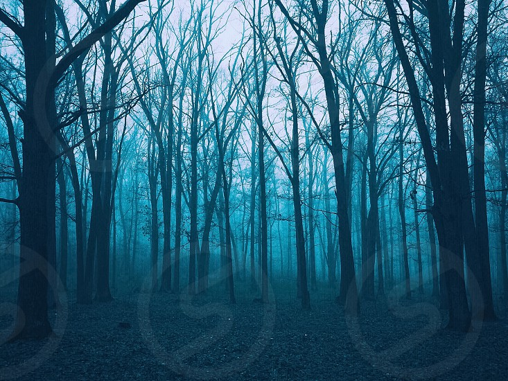 misty forest with leafless trees photo
