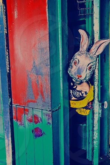 white and black rabbit artwork photo