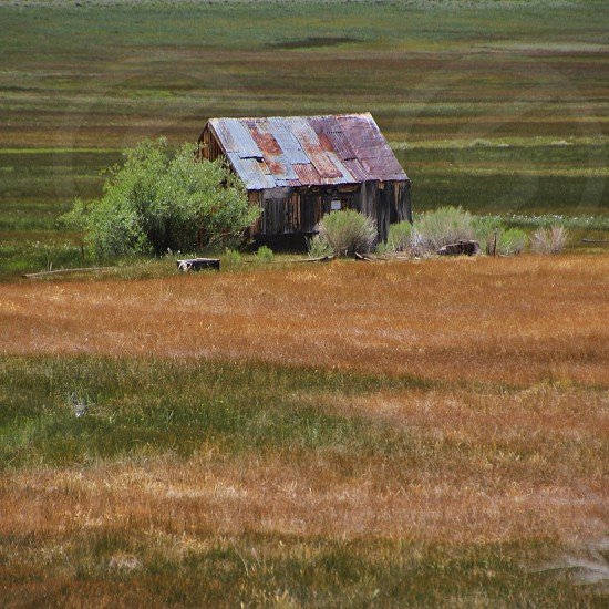 rusty shed and tree in grassland photo