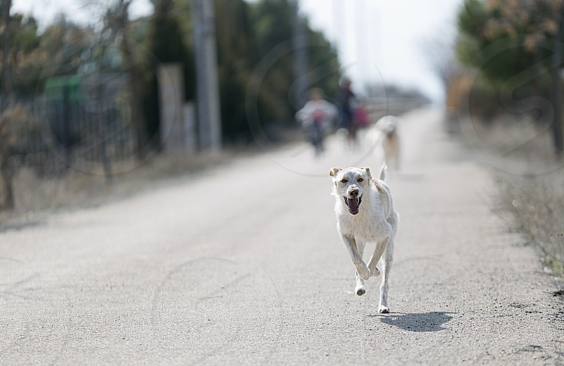 Dog running towards the camera with children behind unfocused. Horizontal shot with natural light photo