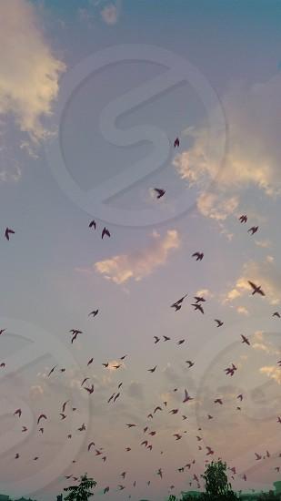 fly over citt photo