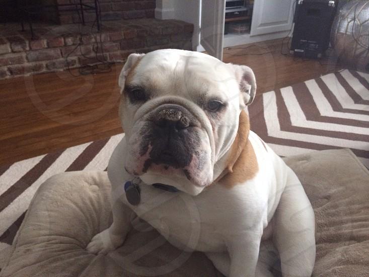 Buster feeling sad photo