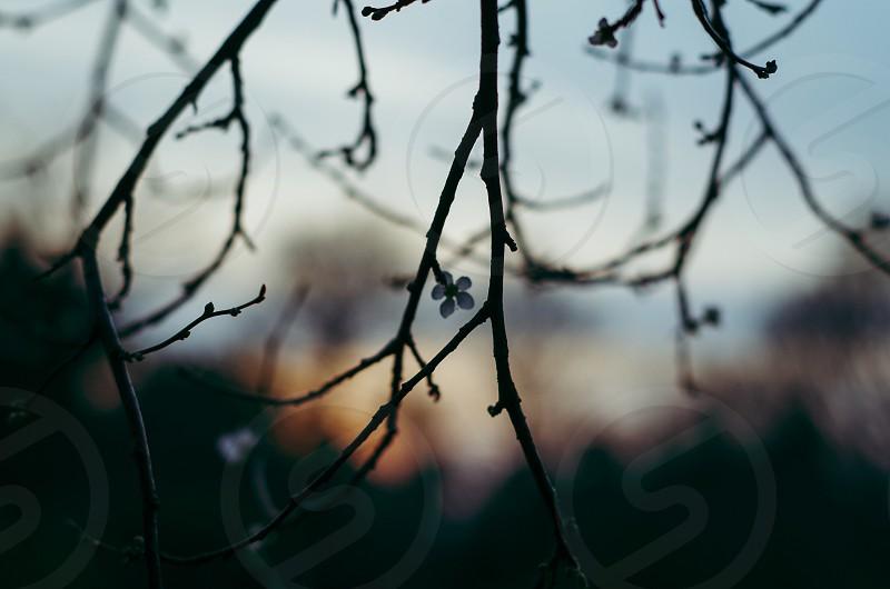 Twilight in Surrey photo
