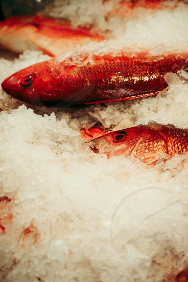 Fresh fish in a California fish market photo