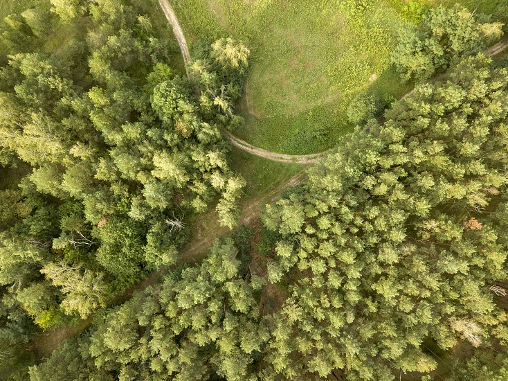 Aerial view from the drone forest foliage with green glade and winding road on a clear summer day. Top view photo
